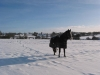 Netherton Hall Winter Horse